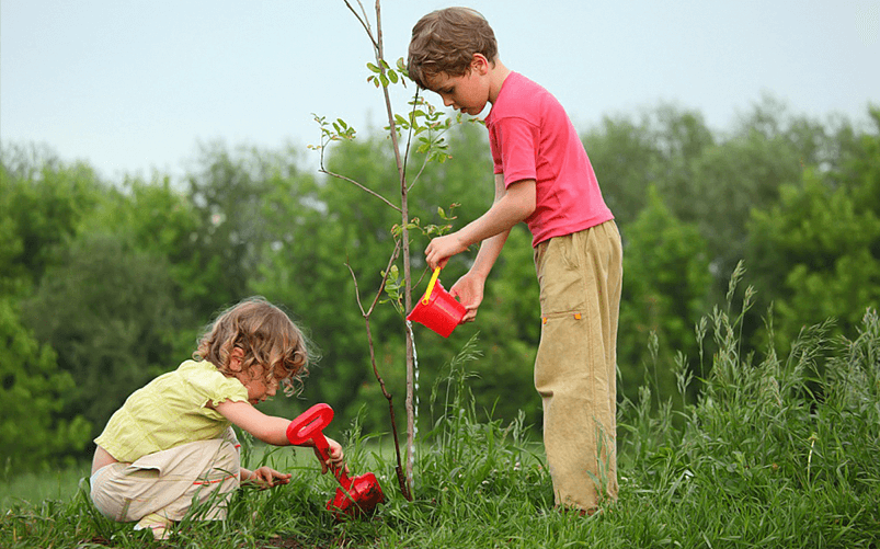 Kids Growing plants, Things to do During the day