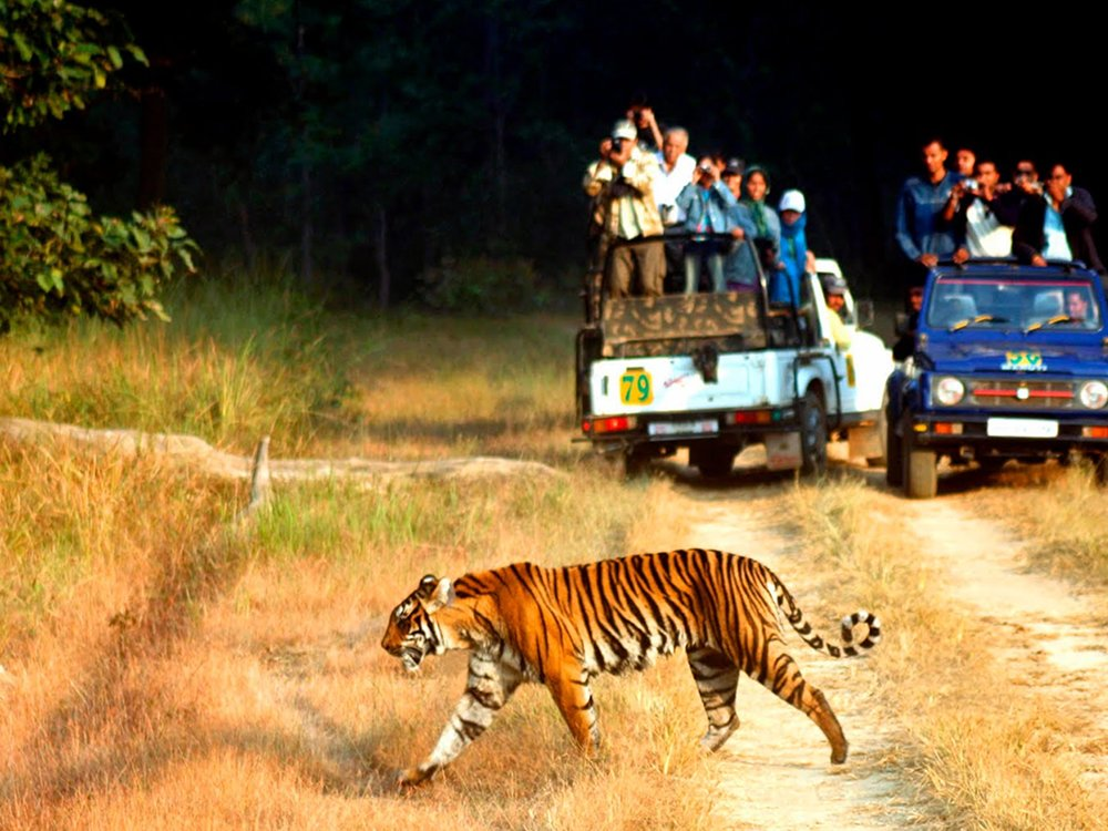 Corbett National Park - things to do in India