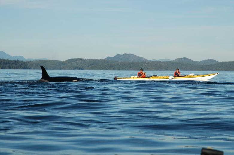 Johnstone Strait, British Columbia - kayak