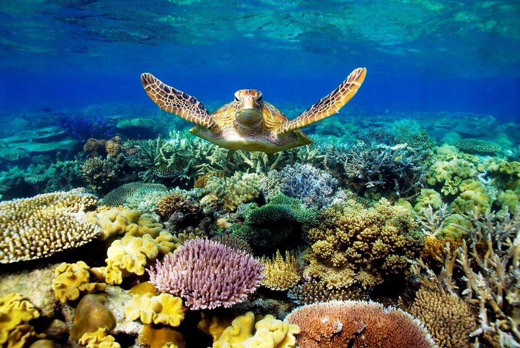 Great Barrier Reef-Top 30 Places To Visit