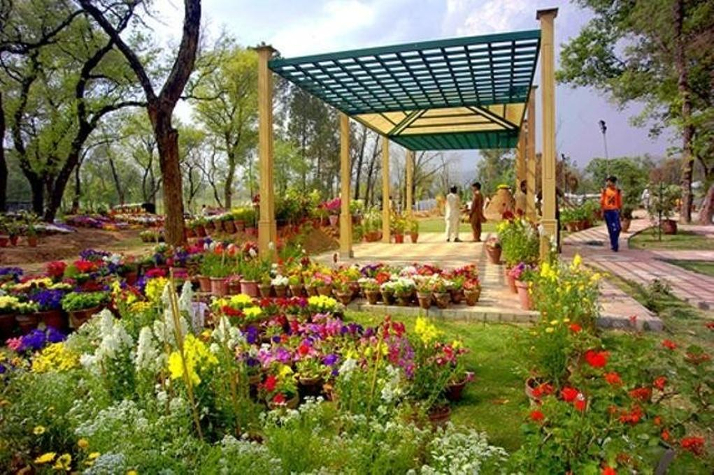 Flowers, Top Places to Visit in Islamabad