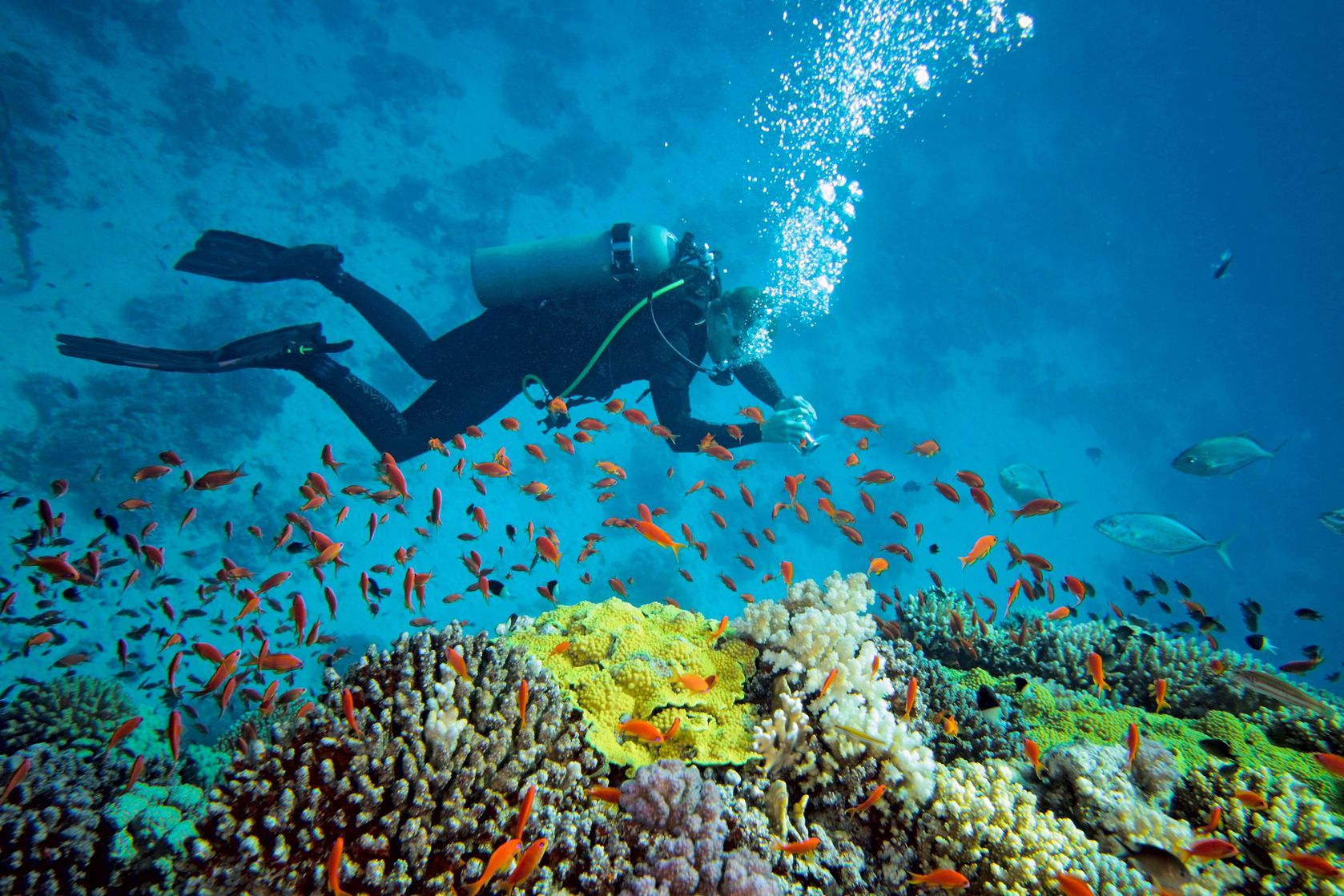 scuba diving India - things to do in India