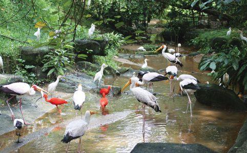 #10 of 15 Things to Do in Kuala Lumpur, Malaysia – Visit the Kuala Lumpur Bird Park - Things to Do in Kuala Lumpur