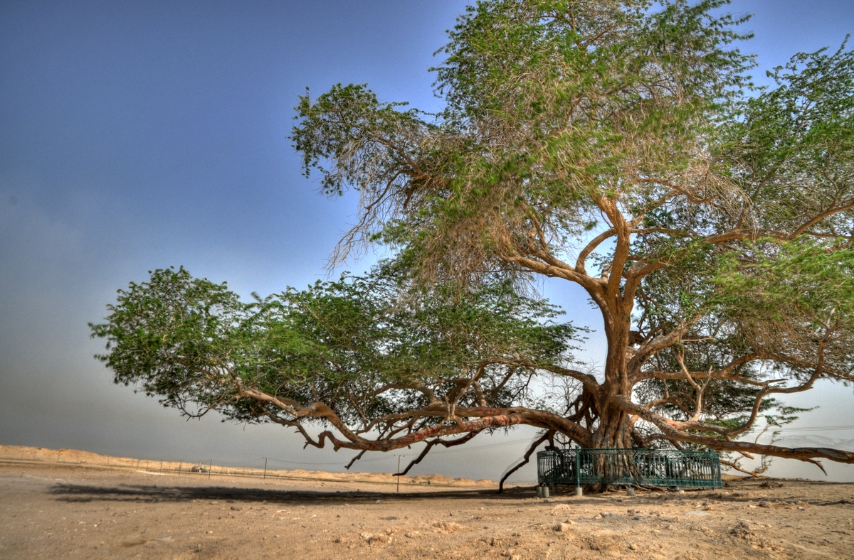 tree of life, Points of Interest in Bahrain