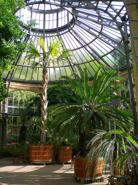 #12 of 15 Places to See in Amsterdam - Hortus Botanicus - Places to See in Amsterdam