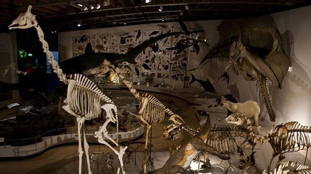 Zoological Museum,Things to do in Copenhagen