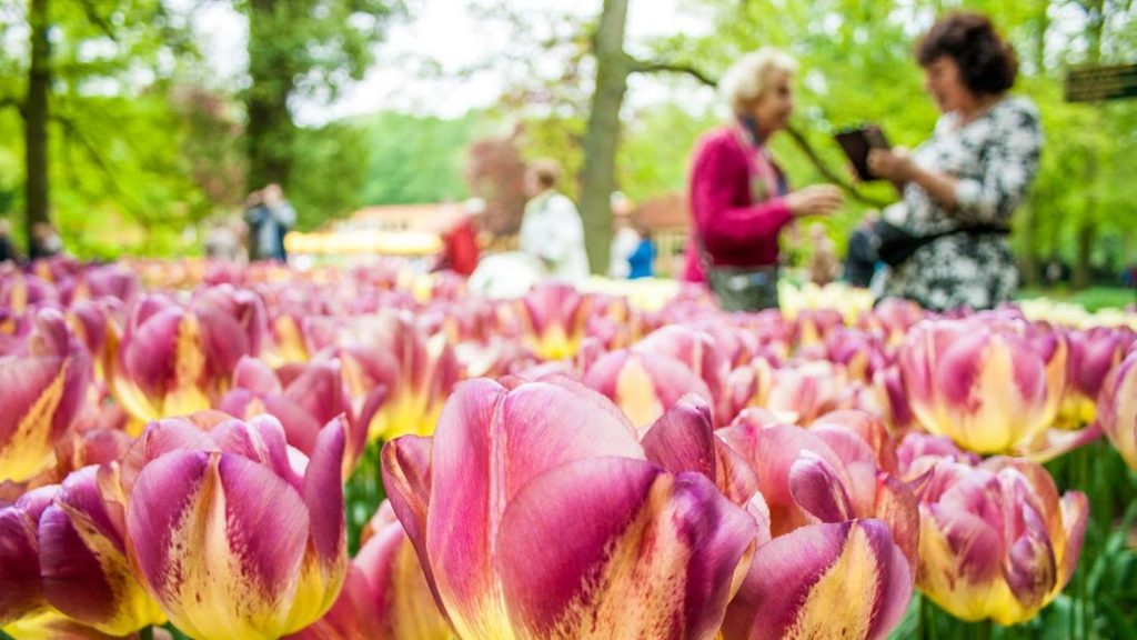 #6 of 15 Places to See in Amsterdam - Keukenhof Garden - Places to See in Amsterdam