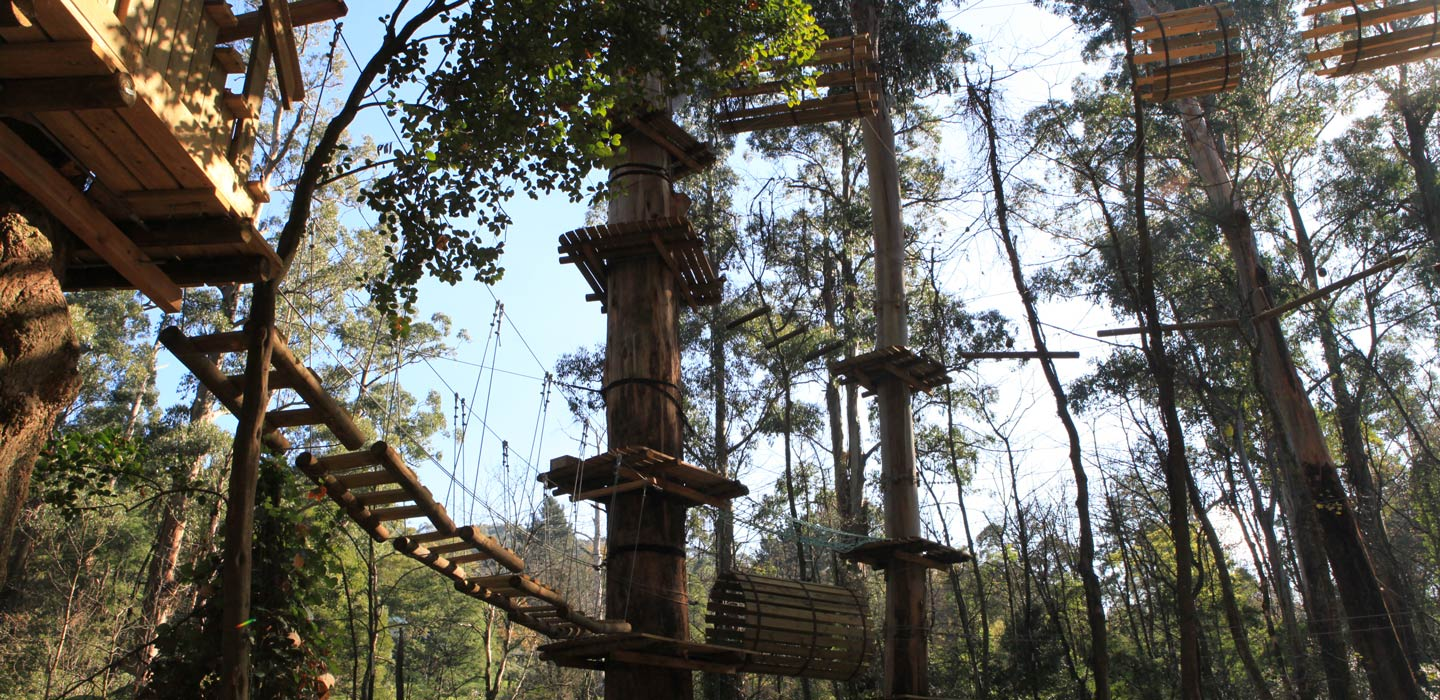 Flying Foxes Trees Adventure - Trees Adventure