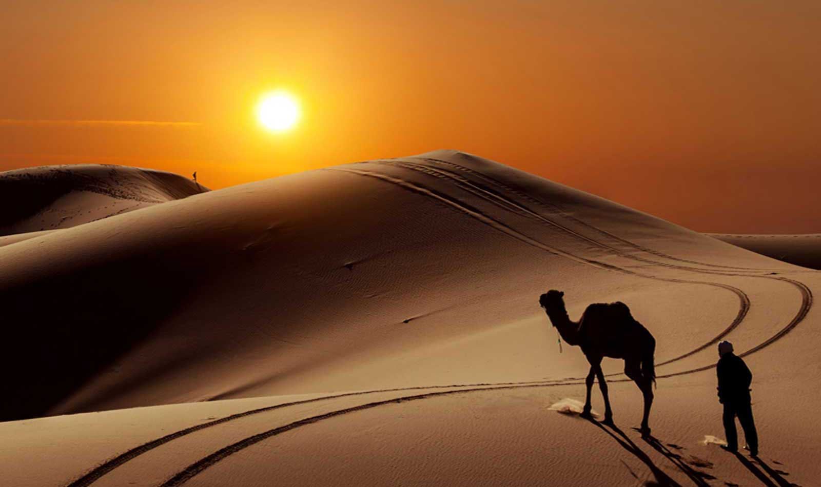 camel is walking - things to do in Morocco