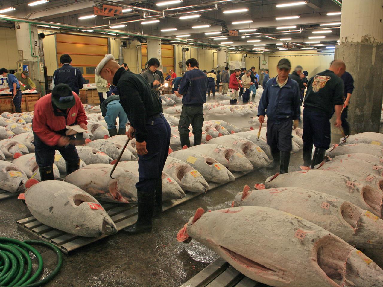 Tsukiji Fish Market, Things to do in Tokyo