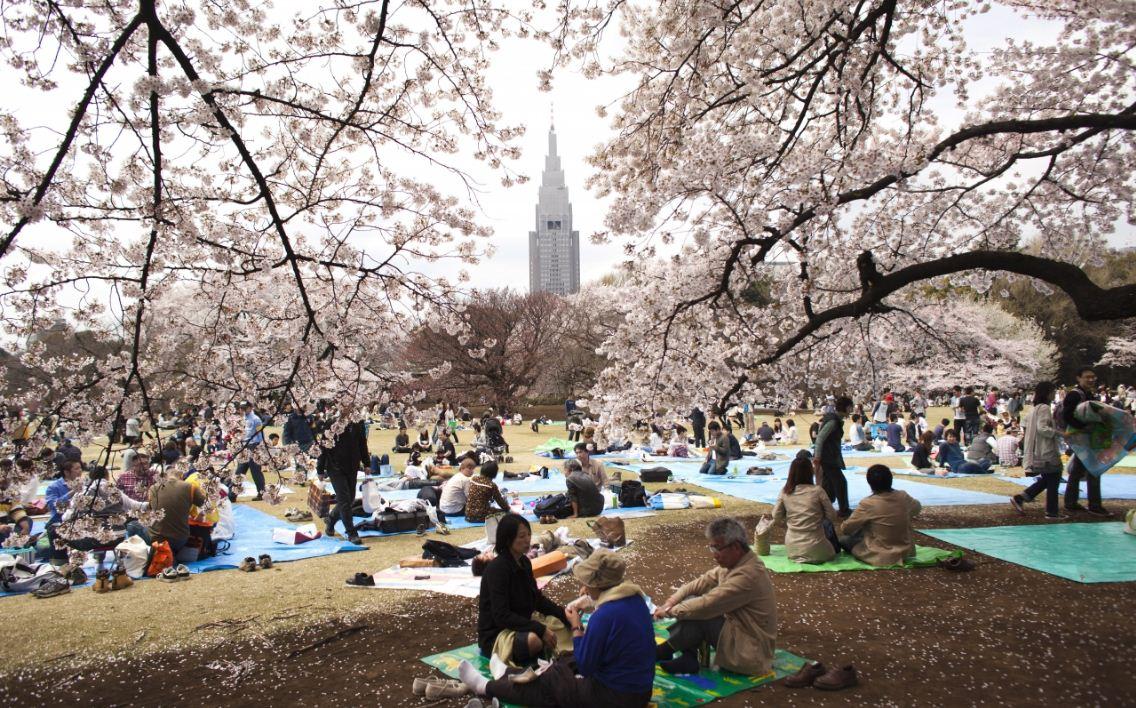 Shinjuku Gyoen National Garden, Things to do in Tokyo