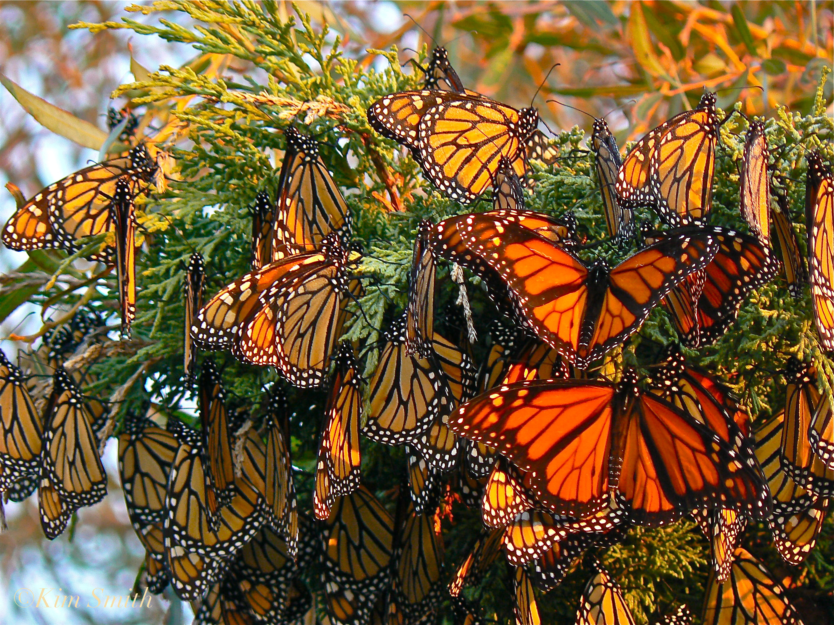 yellow butterflies - things to do in Mexico City