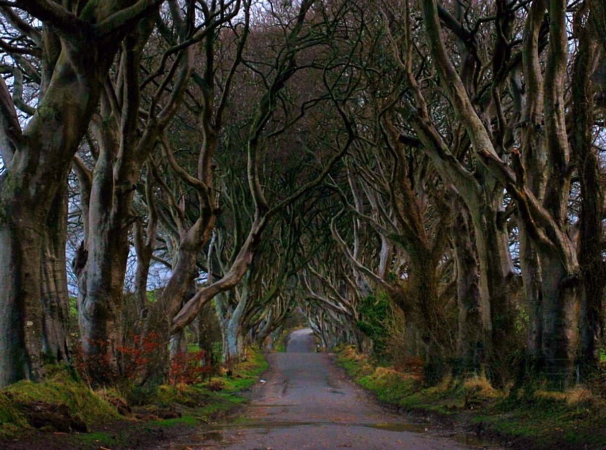The Dark Hedges, Northern Ireland - places to visit in the world