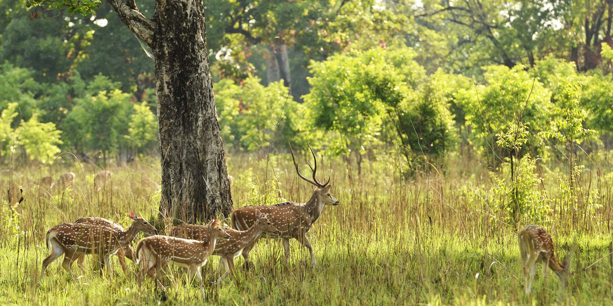 deers and black tree - things to do in Nepal