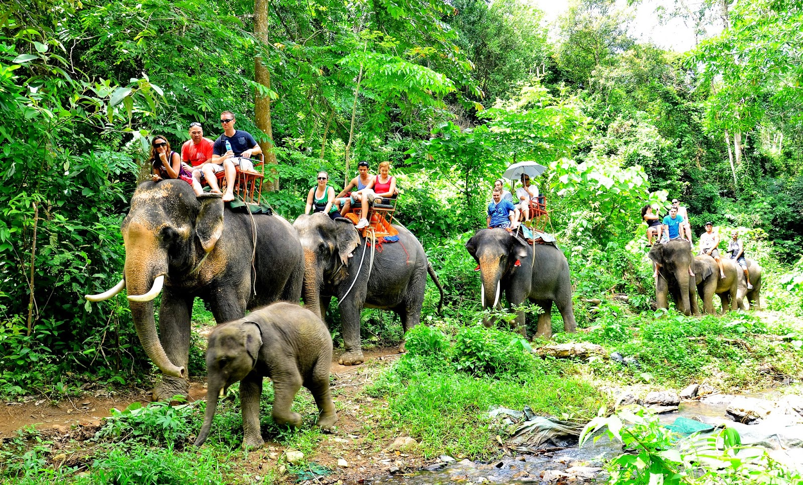 baby elephant - things to do in Thailand