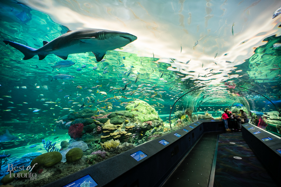 Ripley's Aquarium Of Canada, Unique things to do in Toronto