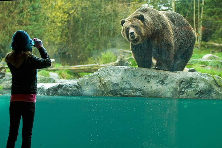 bear, Unique things to do in Seattle