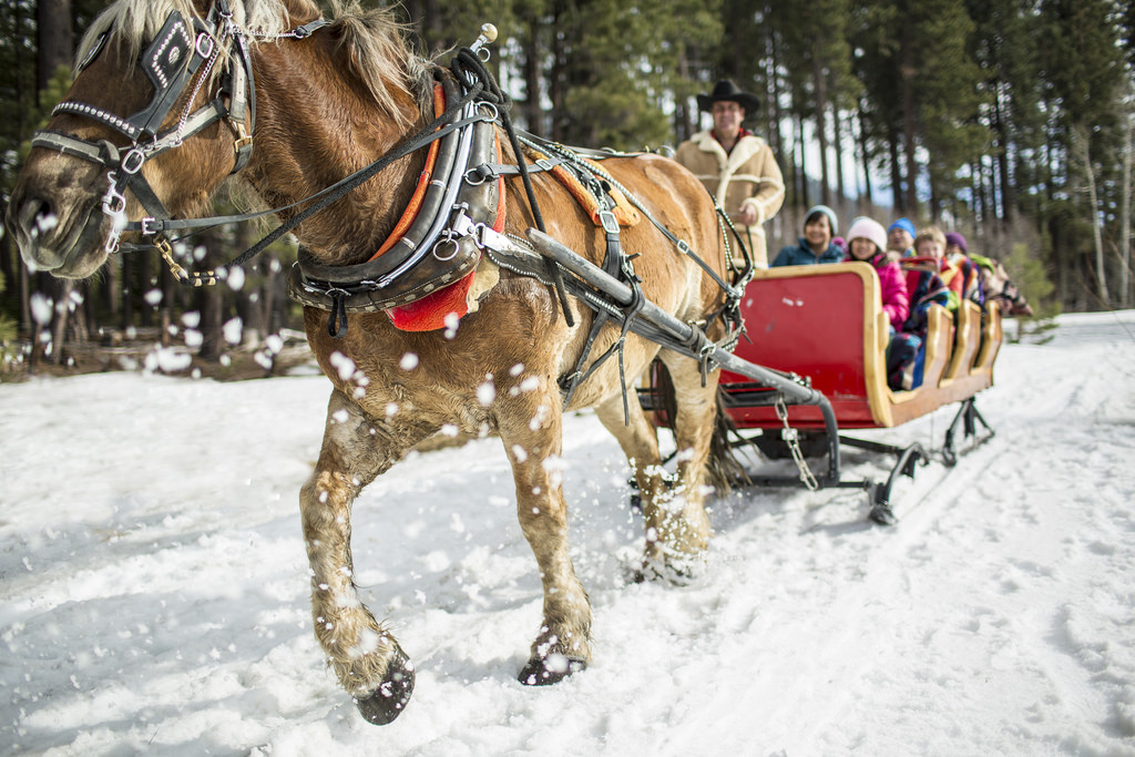 Horse-drawn Sleigh ride, Things to do in Mont Tremblant