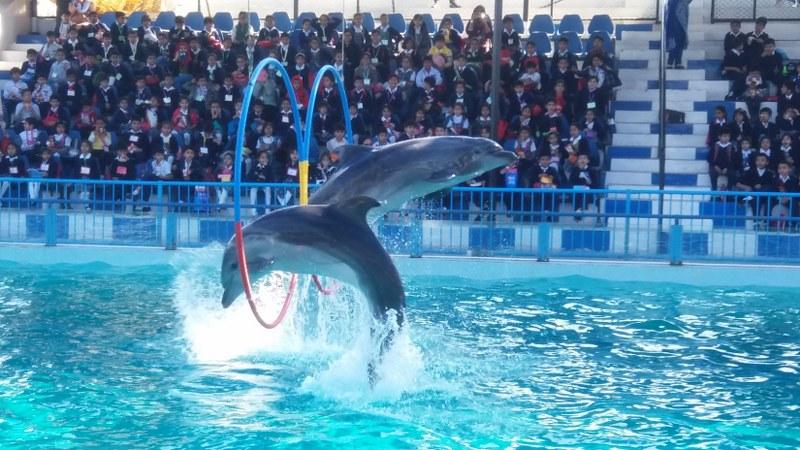 Dolphin Show in Karachi Pakistan