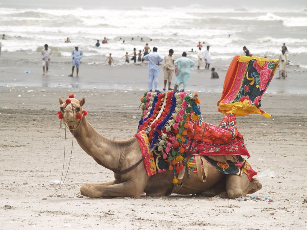 camel at clifton beach, Things to do in Karachi