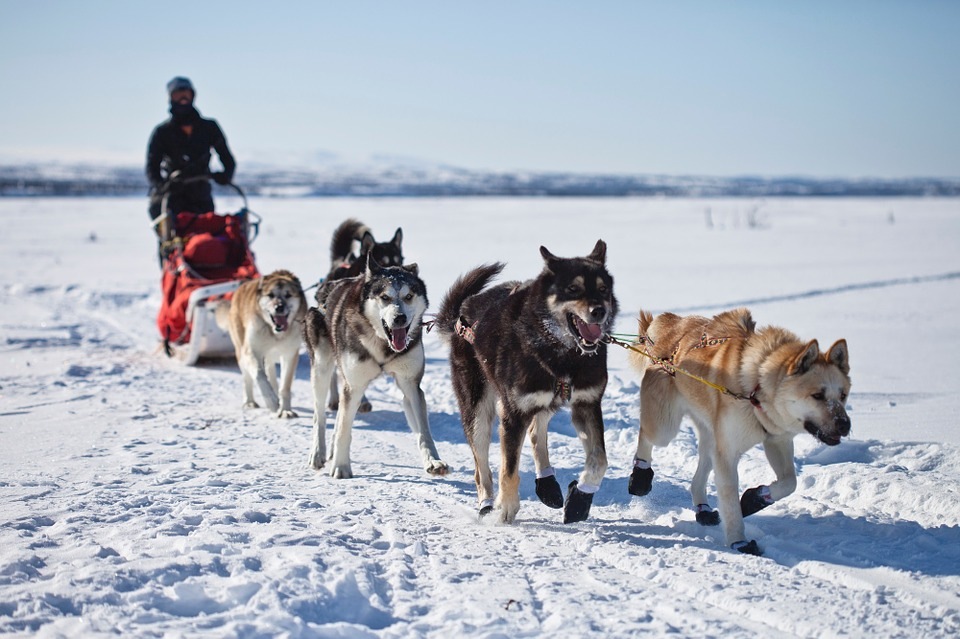 DogSledding, Things to do in Mont Tremblant