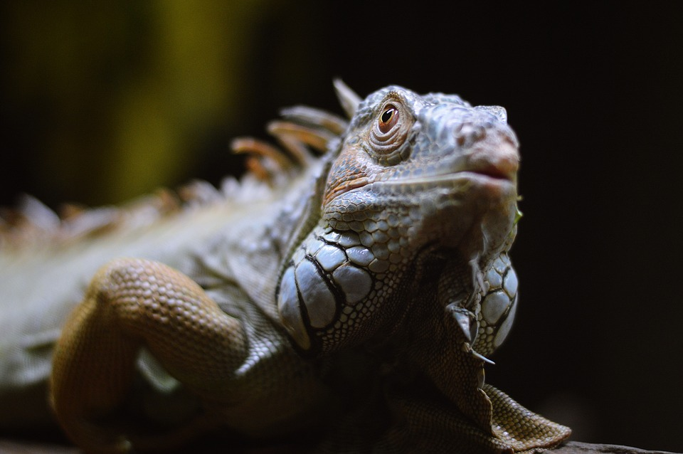 Little Ray's Reptile Zoo, Things to do in Ottawa