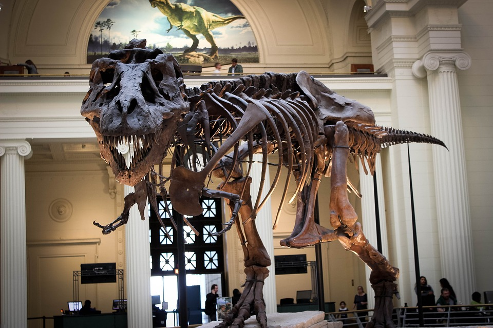 royal tyrrell museum, Things to do in Calgary, Canada