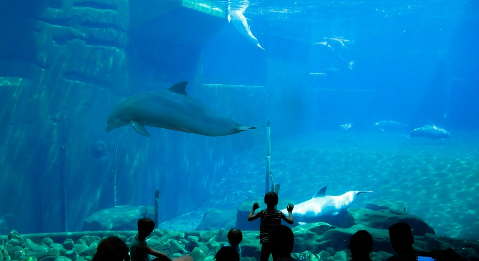 aquarium, Things to do in Vancouver