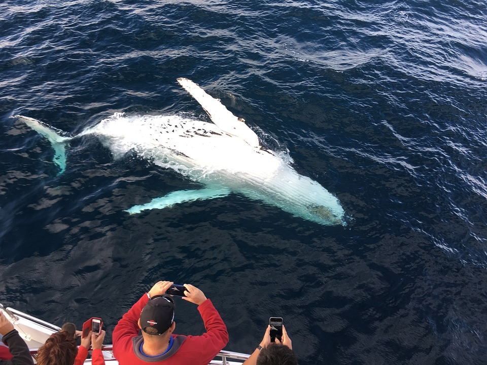 whale watching, Things to do in Victoria, Canada