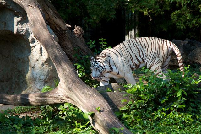 Dusit zoo - things to do in Bangkok
