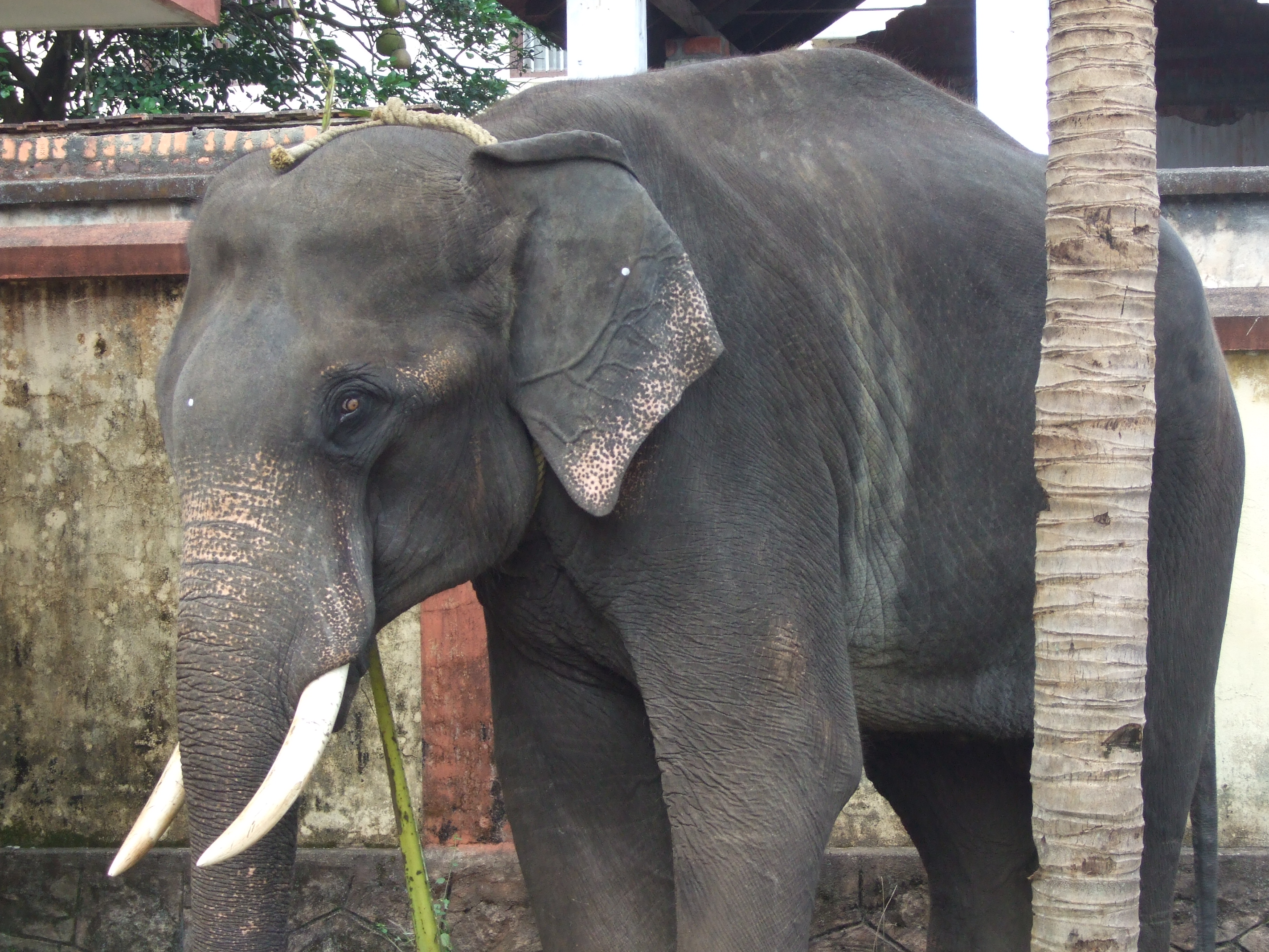 Elephant sanctuary - Things to do in Chinag Mai