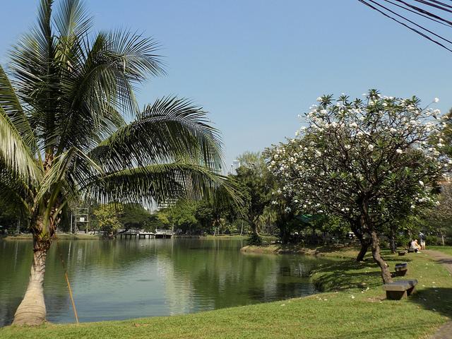 Lumpini park - things to do in bangkok