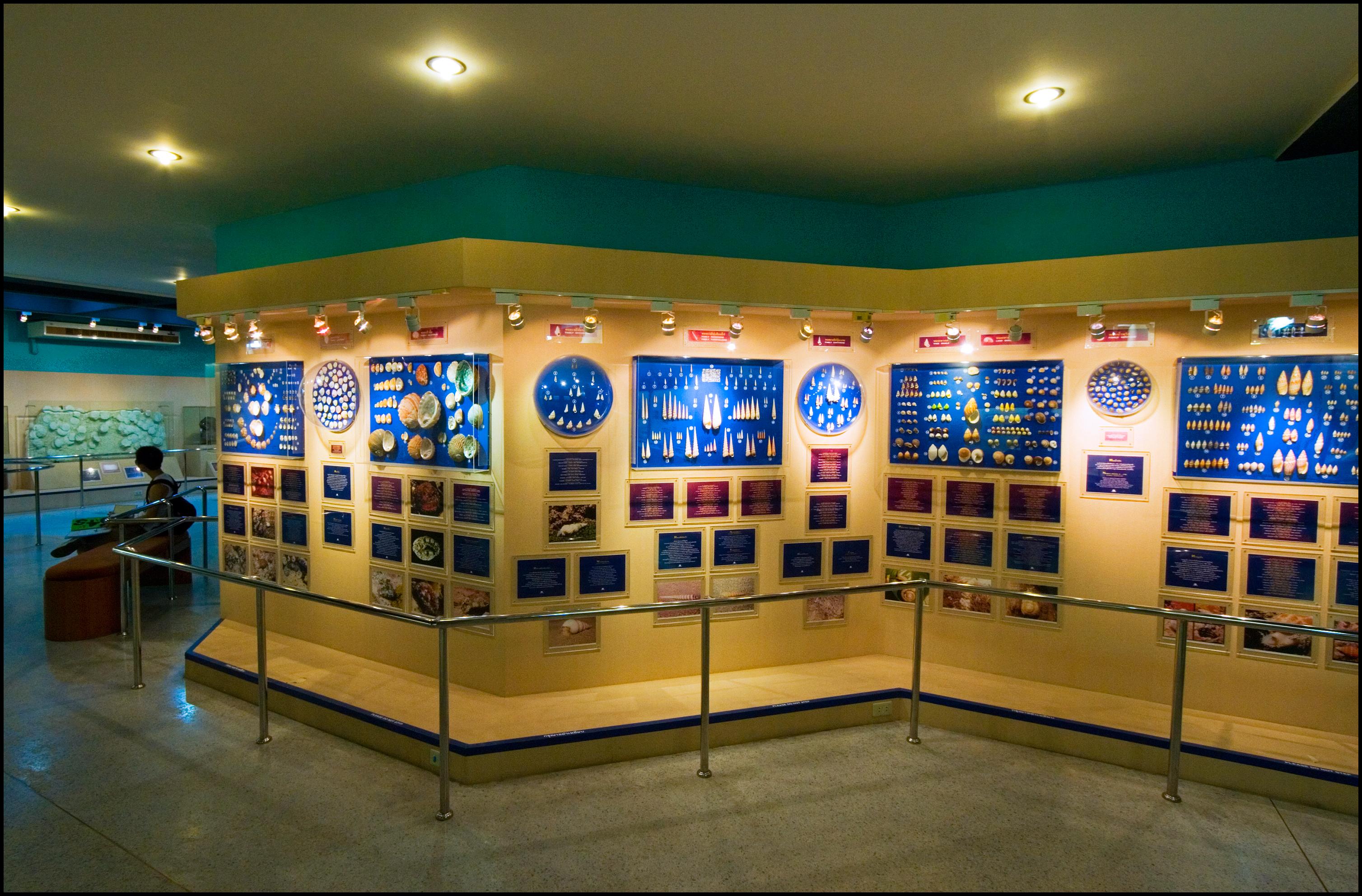Phuket sea-shell museum - things to do in Phuket