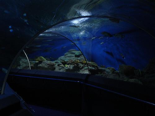 Underwater life of animals - things to do in Pattaya